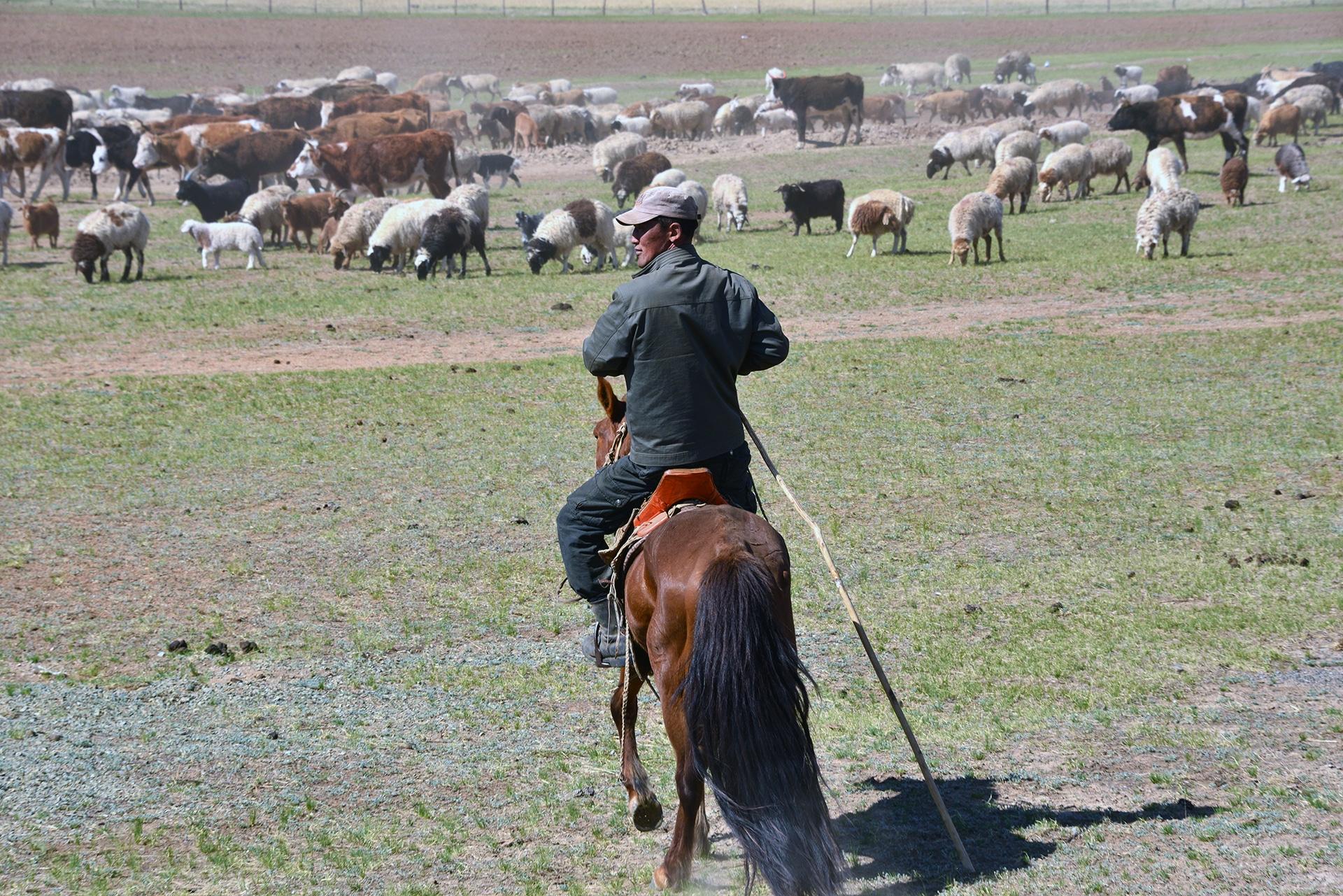 Alberto-Barbera-Nella steppa-Mongolia
